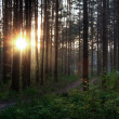 Sunset in the forest — Stock Photo #2554902