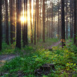 Sunset in woods — Stock Photo #2554915