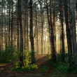 Sunset in the forest — Stock Photo