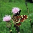 Motley butterfly on the flower — Stock Photo