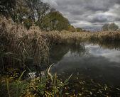 Old pond — Stock Photo