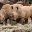 Royalty-Free Stock Photo: Two rhinoceroses