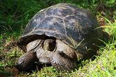 Turtle — Stock Photo