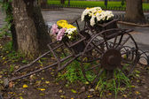 Old cart with flowers — Stock Photo