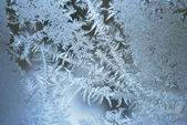 Frost — Photo