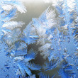 Frost — Stock Photo #1889559