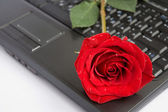 Rose over laptop — Stock Photo