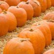 Royalty-Free Stock Photo: Pumpkins in pumpkin patch