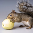 Stock Photo: Little squirrel eats apple
