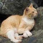 Red homeless cat — Stock Photo