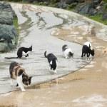 Homeless cats on road — Stock Photo