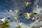 Seagulls — Stock Photo