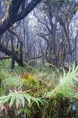 加勒比国家森林 el 云雀。tr — 图库照片