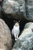 Three-coloured cat — Stock Photo