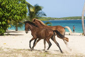 Running along the beach stallions — Stock Photo