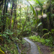 Caribbean National Forest  El Yunque. Tr - Stock Photo