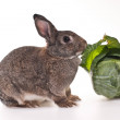 Royalty-Free Stock Photo: The rabbit with cabbage