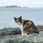 Three-coloured cat the Fragmentary ear — Stock Photo