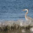 Expecting heron — Stock Photo #1149174