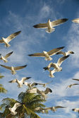 The seagull in flight — Stock Photo