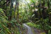 Caribbean National Forest El Yunque. Tr — Stock Photo