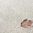 Stock Photo: Frozen into the ice maple leaf
