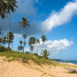 Palm grove on the shore of the ocean — Stock Photo #1161748