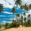 Palm grove on the shore of the ocean — Stock Photo #1161755