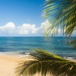 Palm  on the shore of the ocean - Stock Photo