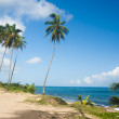Palm grove on the shore of the ocean — Stock Photo #1161803