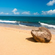 Coconut on the beach — Stock Photo