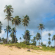 Stock Photo: Palm grove on the shore of the ocean