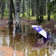 Lonely umbrella in a puddle — Stock Photo