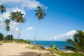 Palm grove on the shore of the ocean — Stock Photo
