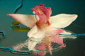 Wet orchid — Stock Photo