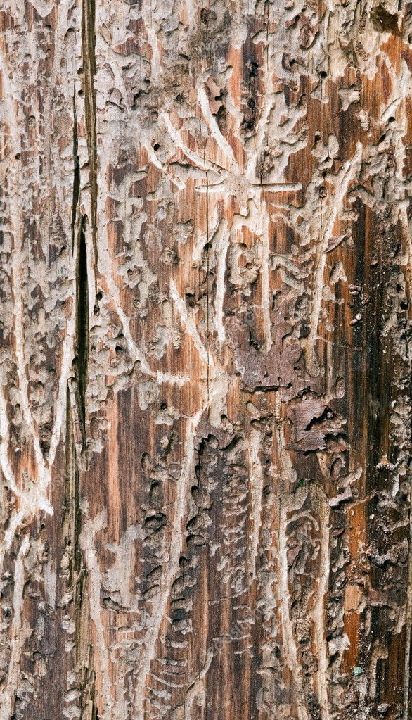 Natural wooden texture of section of an old tree — Stock Photo #1183344