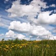 Meadow with fowers and blue sky — Stock Photo #1305918
