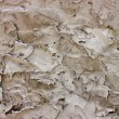 Rough Plaster wall - Stock Photo