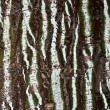Texture of a bark of a tree — Stock Photo