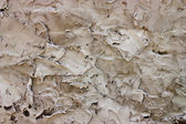 Rough Plaster wall — Stock Photo