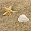 Sand and sea shell - Foto de Stock  