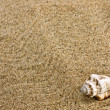 Sand and sea shell - Stock Photo