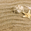 Sand and sea shell — Stock Photo