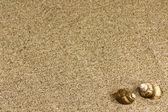 Sand and sea shells — Stock Photo