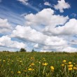 Meadow with fowers and blue sky — Stock Photo