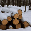 Brown logs in winter forest - Stock Photo