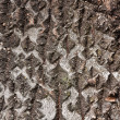 The texture of a bark of a birch tree — Stock Photo