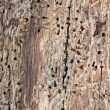 Weathered wood structure — Stock Photo