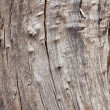 Weathered wood structure — Stock Photo #1429433
