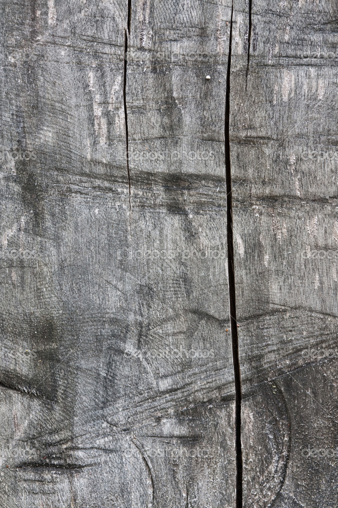 Natural wooden texture of section of an old tree — Stock Photo #1429404